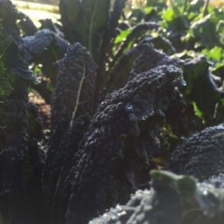 How-to-make-Braised-Cavolo-Nero