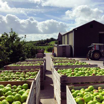Bramley Apple Orchard