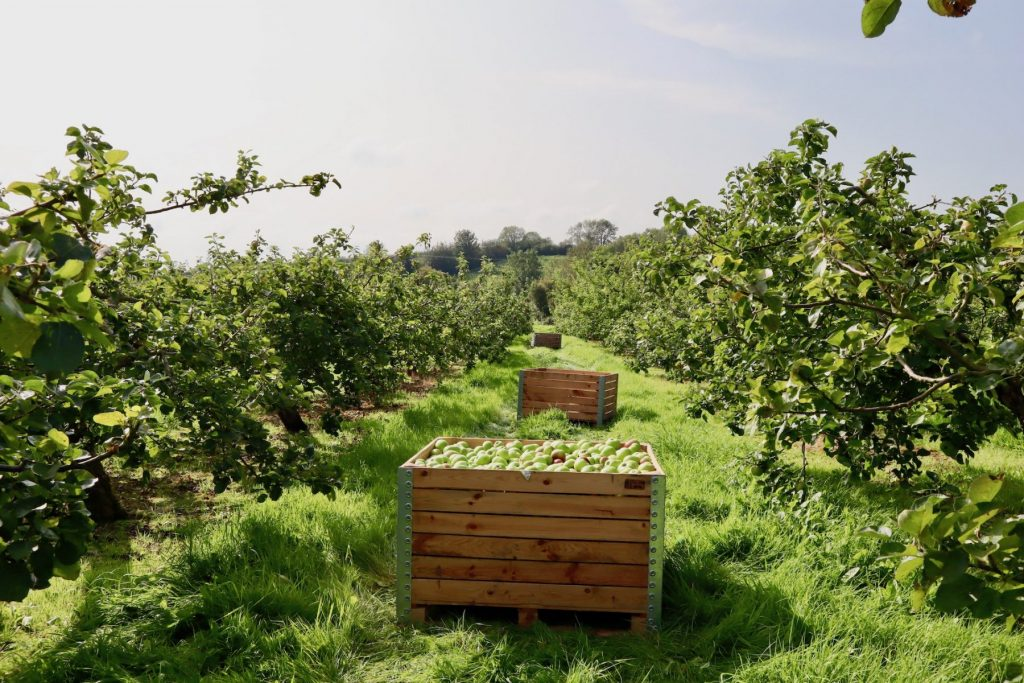 Loacl Orchard