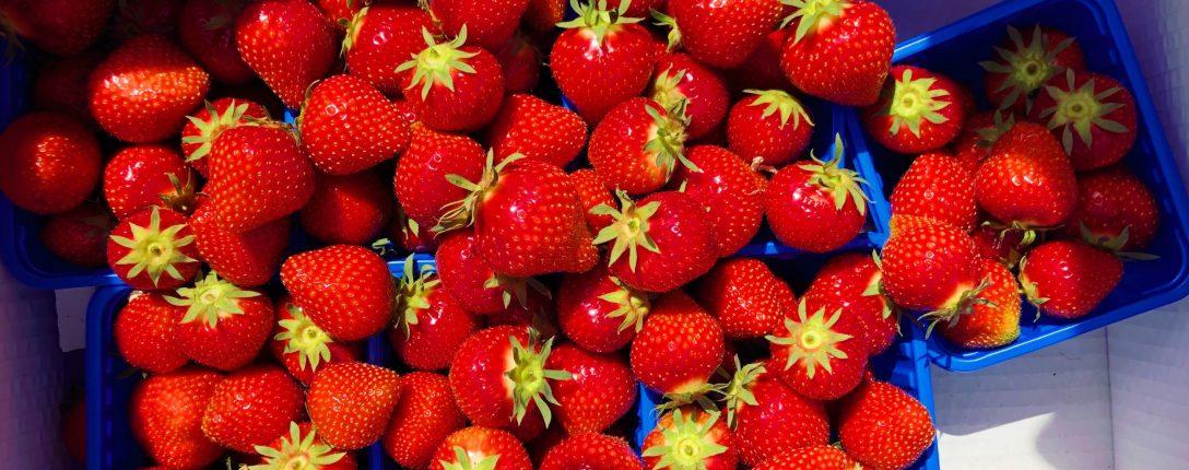 Strawberries in season June
