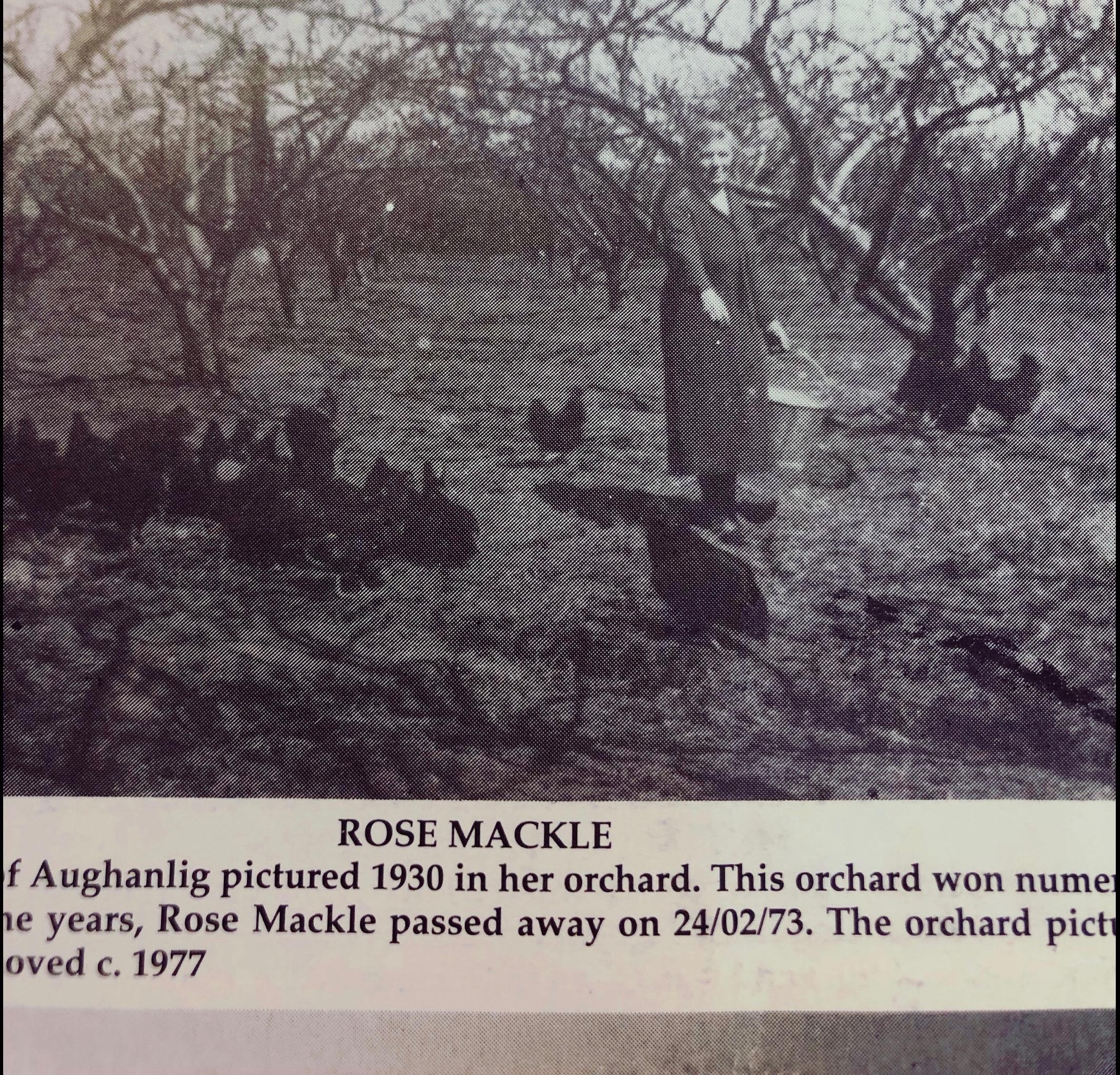 Rose Mackle Bramley Apple Orchard